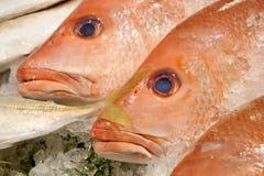 Los pescados frescos del pargo rojo Imagenes de archivo