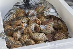 Los pescados frescos y los crustáceos en Cambrils se abrigan, Tarragona, España Imágenes de archivo libres de regalías