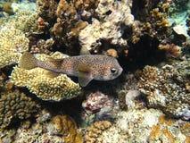 Los pescados irregulares Fotos de archivo libres de regalías