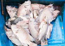Los pescados mueren debido a las aguas residuales fotografía de archivo