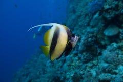 Los pescados se cierran para arriba Fotos de archivo