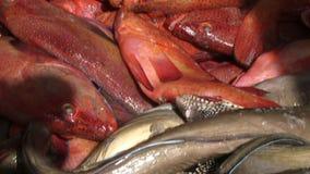 Los pescados se cierran para arriba en un banco metrajes