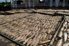 Los pescados secados Fotos de archivo
