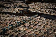 Los pescados secados Fotos de archivo libres de regalías