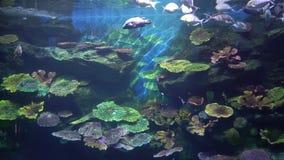 Los pescados tropicales nadan reservado en el arrecife de coral colorido almacen de video