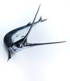 Los pescados vieron Imagen de archivo libre de regalías