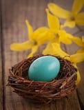 Los petirrojos Egg en la configuración rústica con las flores amarillas Foto de archivo libre de regalías