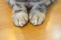 Los pies de gato Fotos de archivo