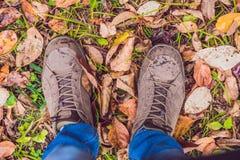 Los pies de zapatillas de deporte que caminan el caída se van en parque con la estación del otoño Foto de archivo