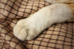 Los pies del gato duermen en el parque Imagen de archivo