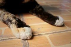 Los pies del gato duermen en el parque Foto de archivo libre de regalías