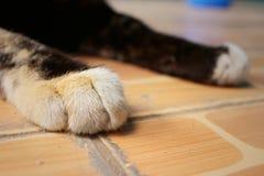 Los pies del gato duermen en el parque fotografía de archivo