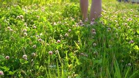 Los pies desnudos de los hombres caminan en un prado verde con las flores rosadas hermosas del trébol en un día de verano soleado almacen de metraje de vídeo