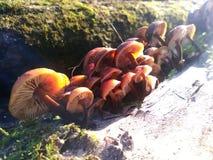 Los Pilze geblendet durch das Licht Stockbilder