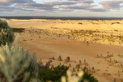 Los pináculos abandonan - Australia occidental fotos de archivo