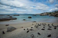 Los pingüinos africanos en la isla Ciudad del Cabo de Robben tan Foto de archivo