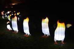 Los pingüinos que brillan intensamente imagenes de archivo