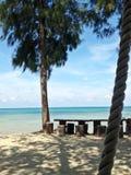 Los pinos están al lado del mar, de mar claro y de cielo azul Foto de archivo libre de regalías