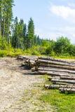 Los pinos muertos después del desastre Imagenes de archivo