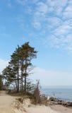 Los pinos verdes que se colocan en la costa en Letonia Imágenes de archivo libres de regalías