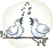 Los pájaros cantantes cantan Foto de archivo libre de regalías