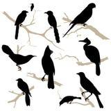 Los pájaros siluetean el conjunto. Vector. Fotografía de archivo libre de regalías