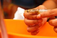 Los platos pelados mano del camarón son anaranjados Fotos de archivo