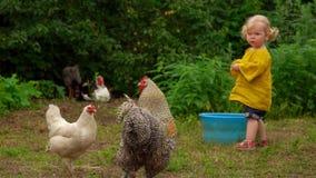 Los pollos caminan en un claro al lado de una niña metrajes