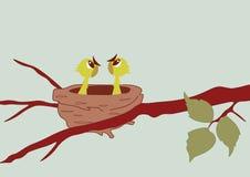 Los polluelos en la jerarquía Imagen de archivo libre de regalías