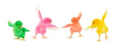 Los polluelos están en la acción Fotos de archivo libres de regalías
