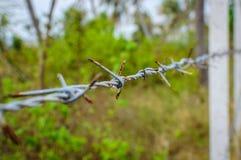 Los posts concretos alineados construyen una cerca del alambre de púas en la selva Foto de archivo libre de regalías