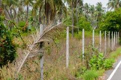 Los posts concretos alineados construyen una cerca del alambre de púas en la selva Fotos de archivo