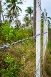 Los posts concretos alineados construyen una cerca del alambre de púas en la selva Imagen de archivo libre de regalías