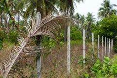 Los posts concretos alineados construyen una cerca del alambre de púas en la selva Fotos de archivo libres de regalías