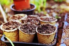 Los potes con el suelo para el jardín brotan en el país al aire libre de la primavera Imágenes de archivo libres de regalías