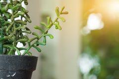 Los potes plásticos de la planta, jardín de la naturaleza adornan el objeto Foto de archivo