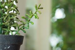 Los potes plásticos de la planta, jardín de la naturaleza adornan el objeto Fotos de archivo