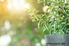 Los potes plásticos de la planta, jardín de la naturaleza adornan el objeto Imagen de archivo