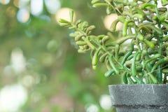Los potes plásticos de la planta, jardín de la naturaleza adornan el objeto Fotografía de archivo
