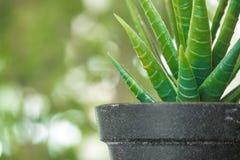 Los potes plásticos de la planta, jardín de la naturaleza adornan el objeto Fotografía de archivo libre de regalías