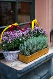 Los potes y la cesta con otoño florece en alféizar al aire libre foto de archivo
