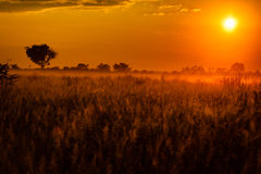 Los prados del delta de Okavango se bañaron en salida del sol africana anaranjada dramática Fotografía de archivo