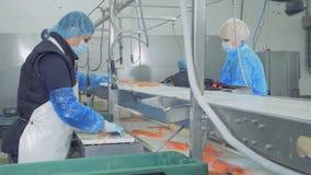 Los prendederos de truchas están consiguiendo limpiados por el personal de la fábrica almacen de video