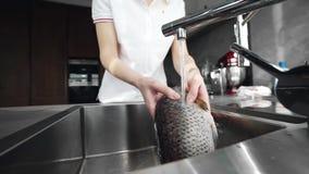 Los prepaers de la mujer pescan para el corte y plato de la fabricación en la comida de la cocina, del mar y del océano, pescado  metrajes