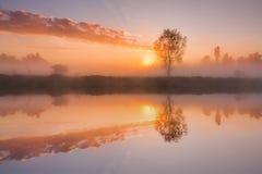 Los primeros rayos del sol naciente en el río brumoso imágenes de archivo libres de regalías