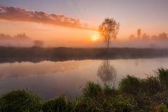 Los primeros rayos del sol naciente en el río brumoso fotos de archivo libres de regalías
