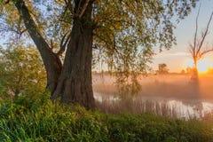 Los primeros rayos del sol naciente en el río brumoso fotos de archivo