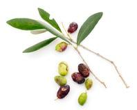 Los problemas, el tiempo y el insecto verdes olivas de la cosecha dañan 2014 Imagenes de archivo