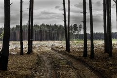 Los problemas separados del bosque de la vida humana y de la influencia en la naturaleza Problemas ecológicos Imagen de archivo libre de regalías