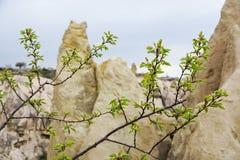 Los prospectos despedidos en árboles en la primavera contra la perspectiva de las montañas fotos de archivo